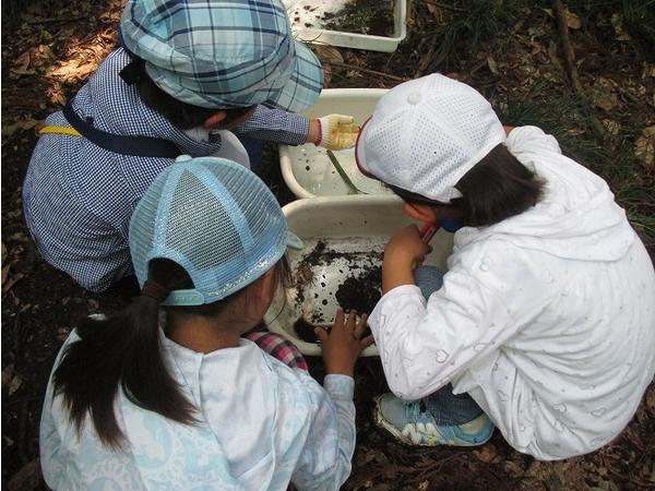 サワガニ・ヤゴなどたくさんの生きものを小川で見つけることができました!